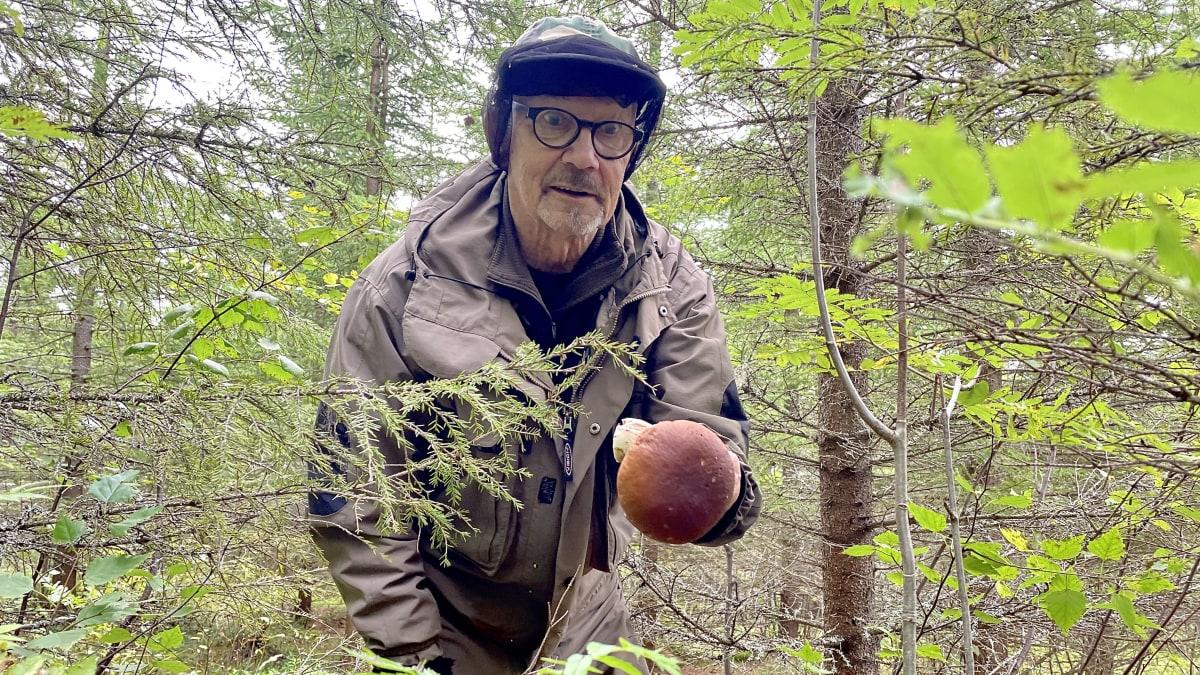 Sotkamolainen Heikki Tarvo hämmästelee herkkutattia.