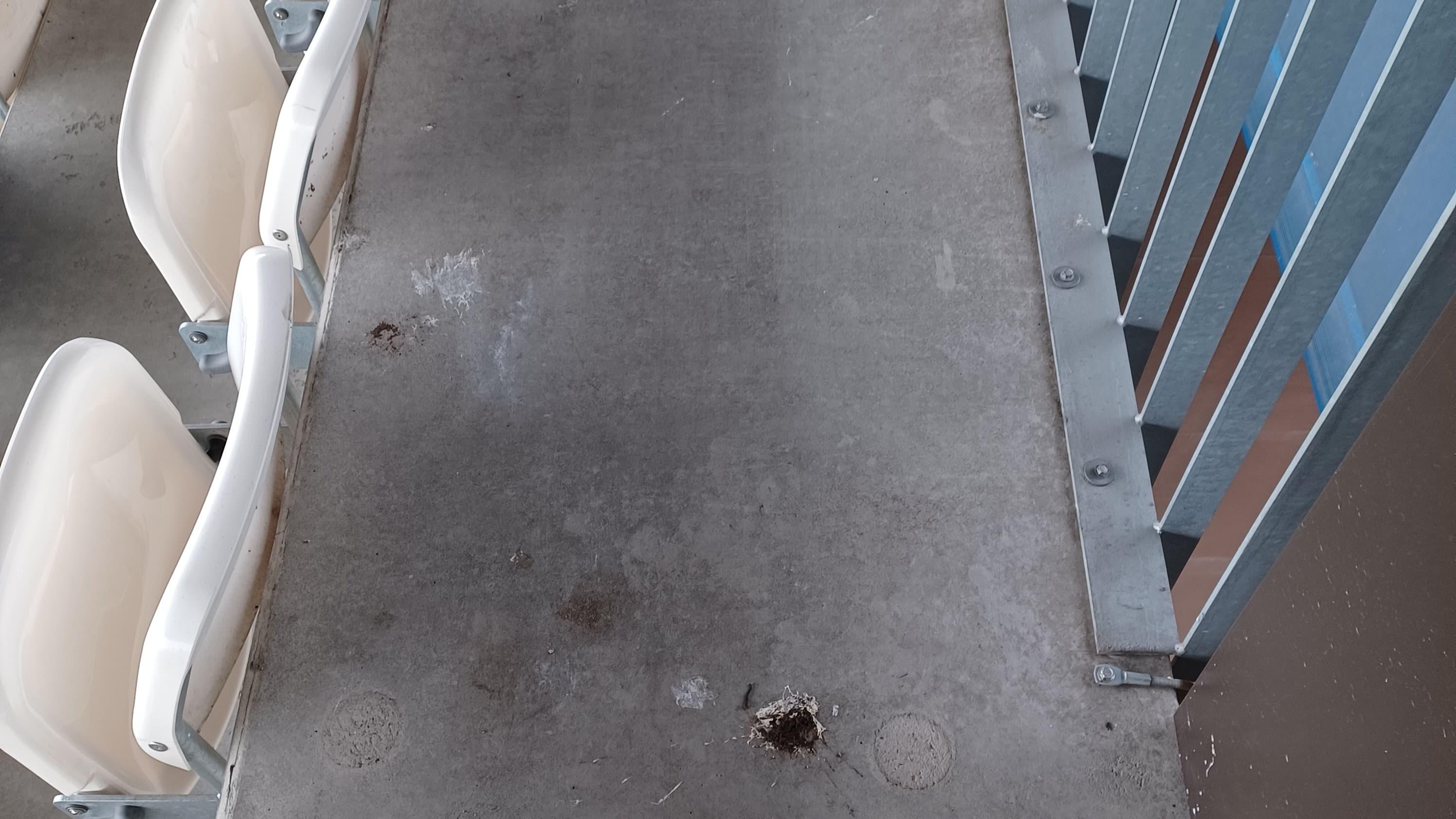 Linnunkakan töhrimää katsomoa Rovaniemen keskuskentällä