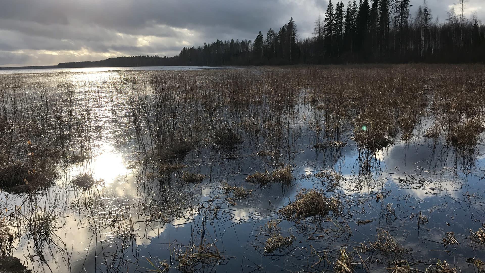 Kuivasjärven pohjoispään rehevöitynyttä rantaa Parkanossa