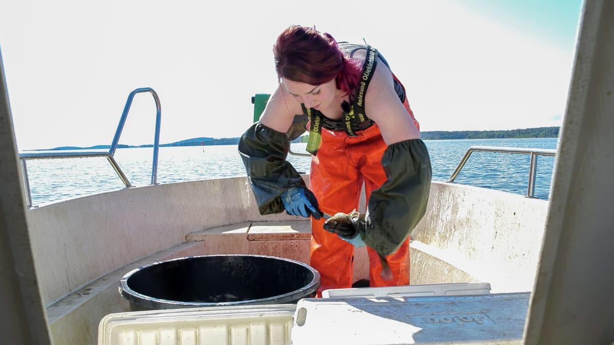 Vesien lämpeneminen näkyy jo ammattikalastaja Johanna Halosen työssä