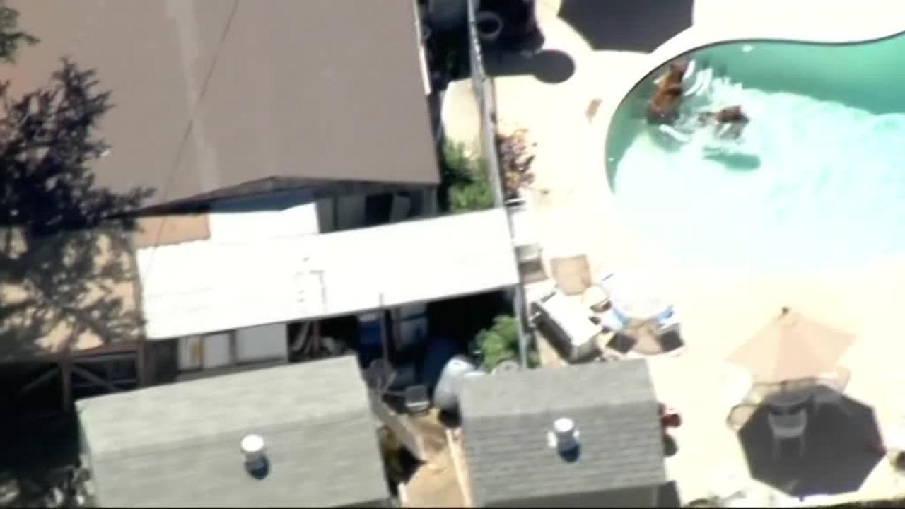 Uutisvideot: Karhuperhe pistäytyi uima-altaassa