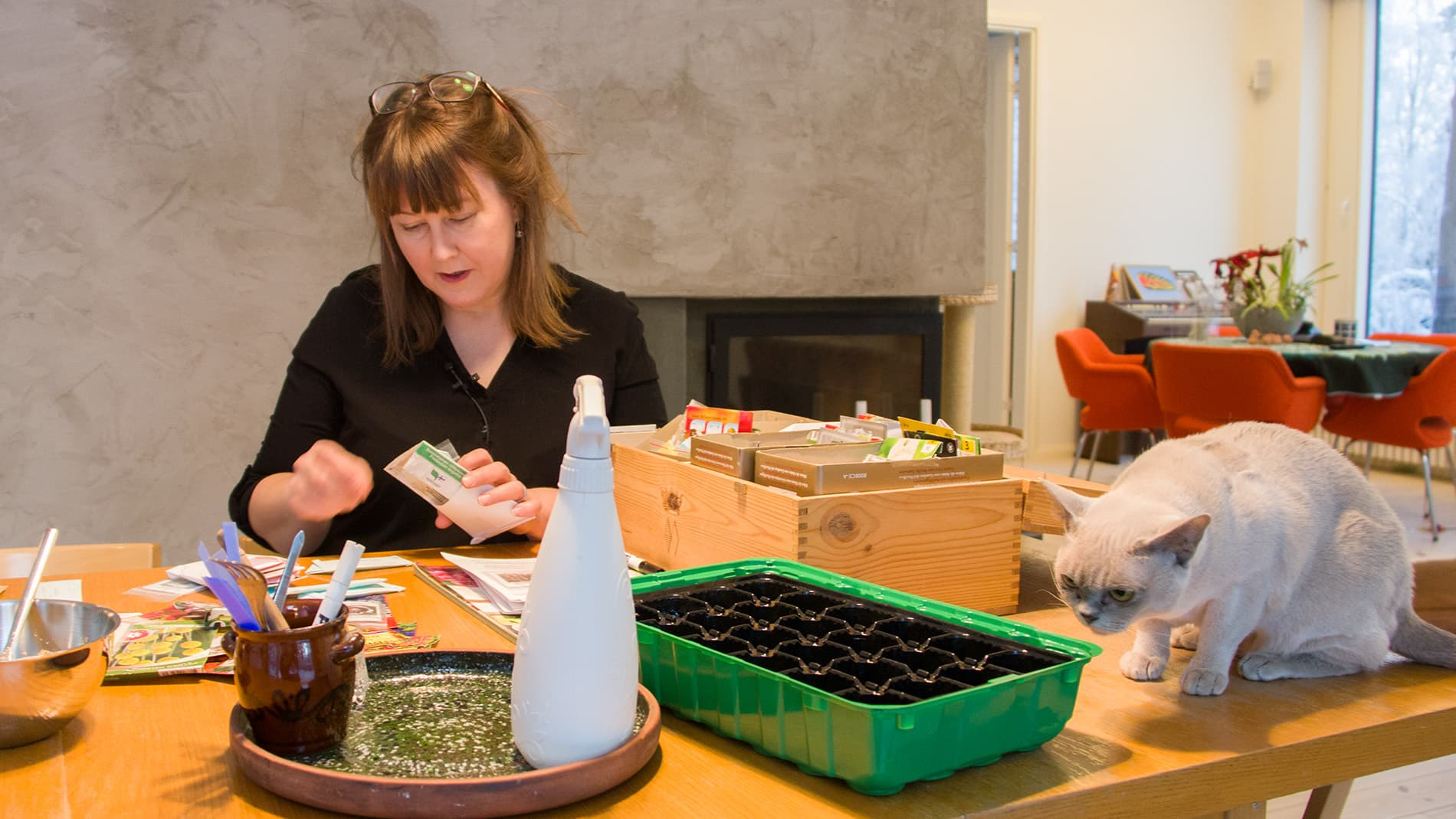 Hanna Vuolteenaho tutkii erilaisia siemeniä.