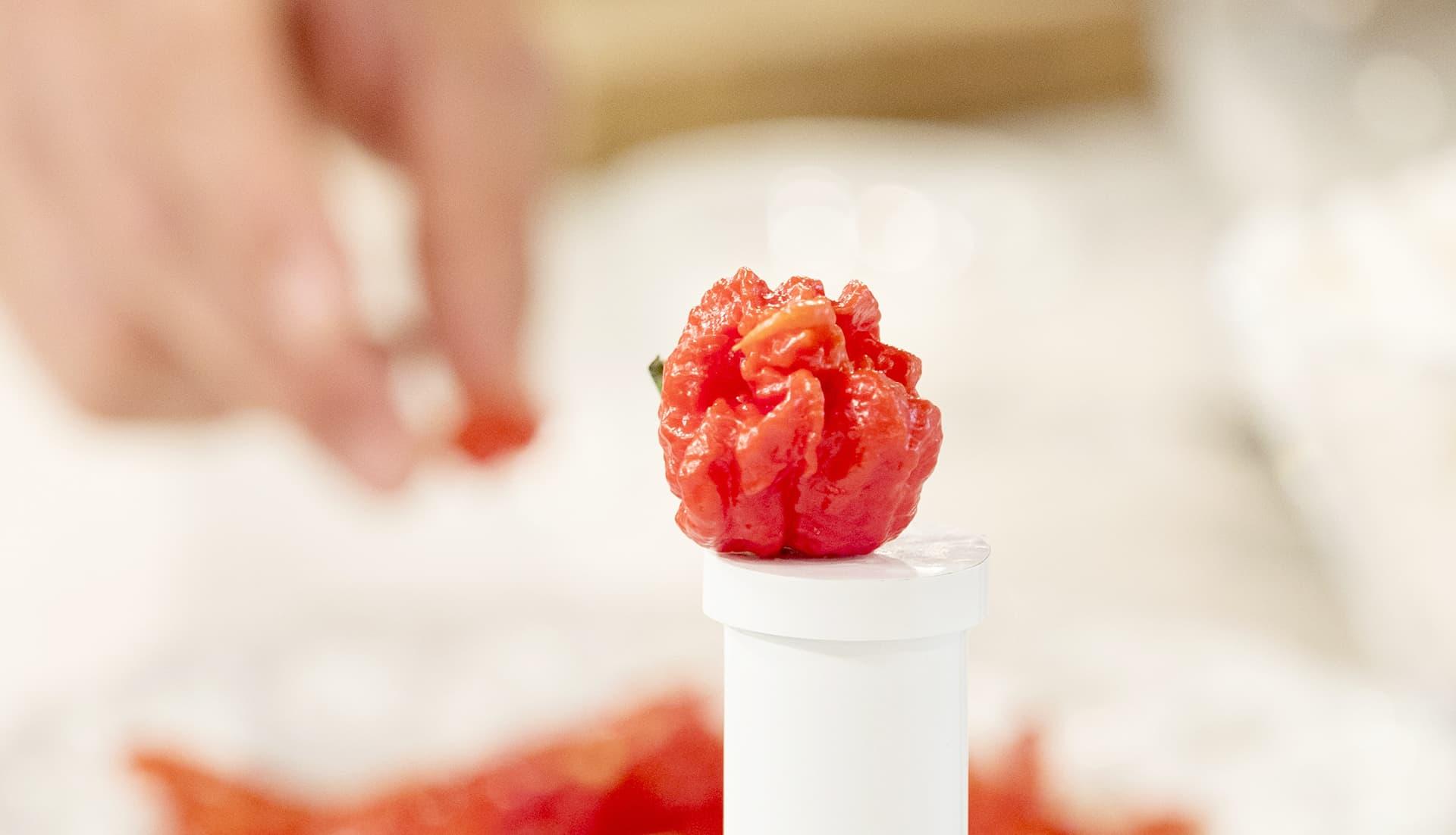 Carolina Reaper -lajikkeen chili