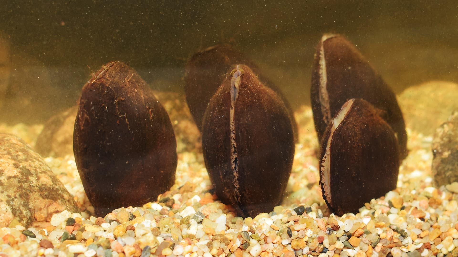 Raakkuja tutkimusaseman akvaariossa.