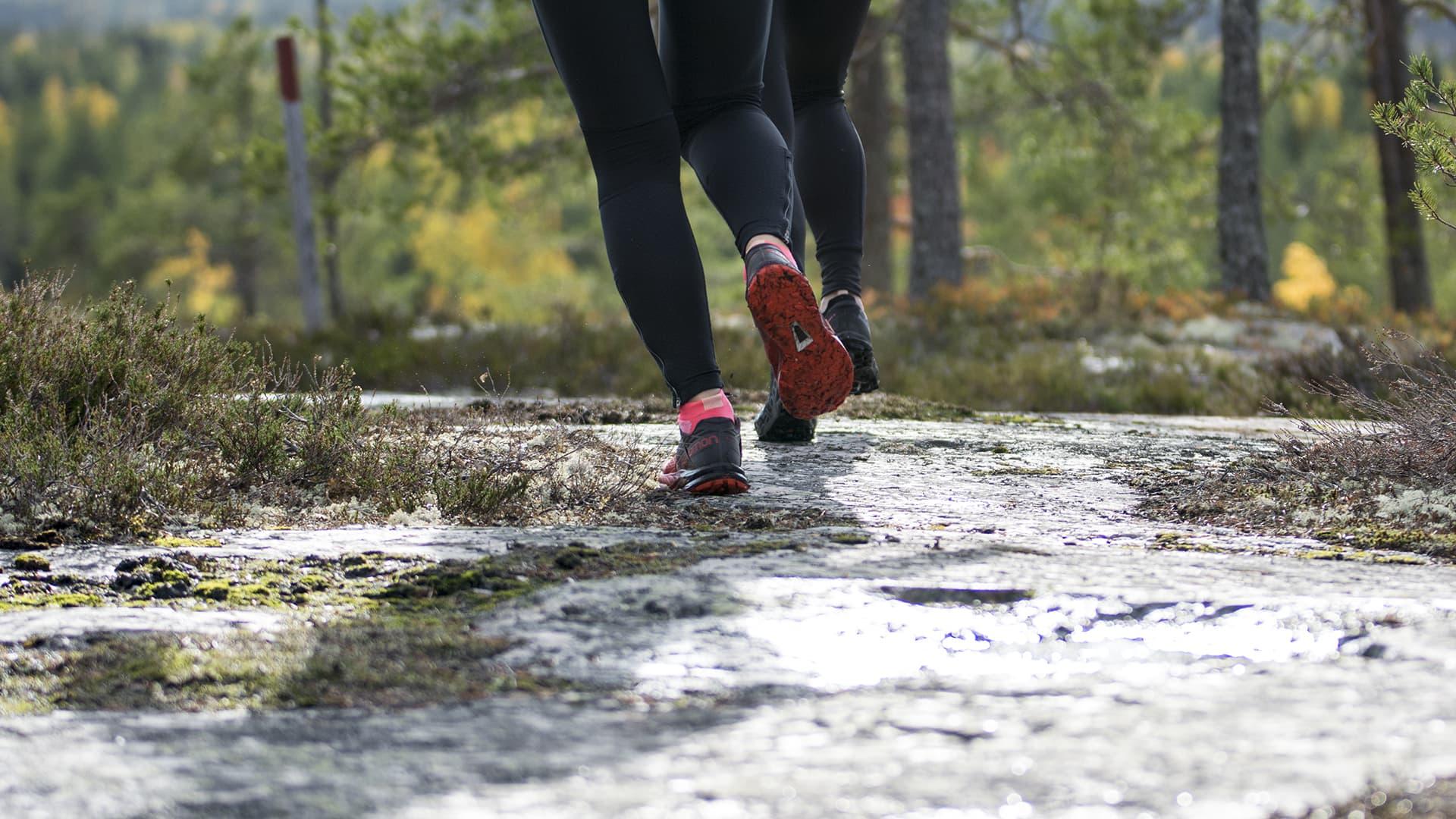 Polkujuoksijat juoksevat metsässä.