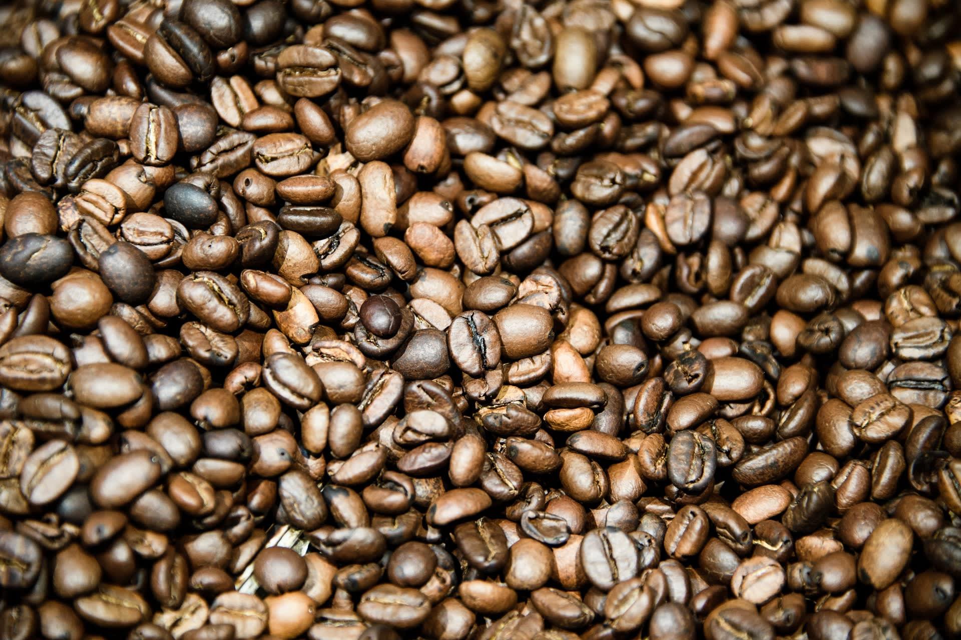 Kahvikasvien tulevaisuus näyttää huonolta tutkimusten mukaan.