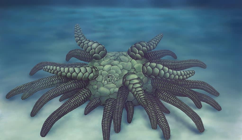 Piirroskuva eläimestä, jolla on kymmenittäin putkijalkoja.