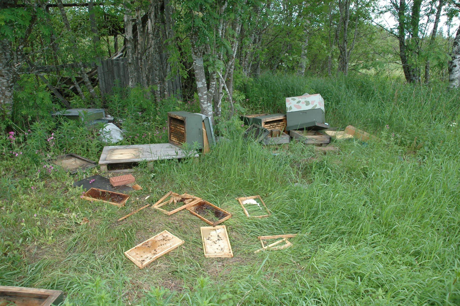 Kuvassa karhun kaatamia mehiläispesiä.