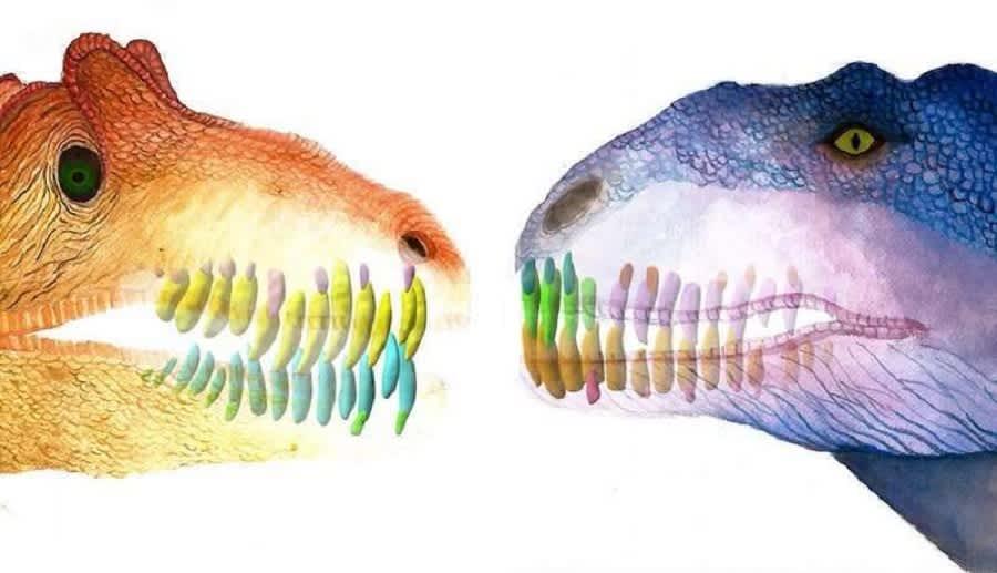 Piirros kahden dinosauksen päästä, joissa näkyvät hampaat juurineen.