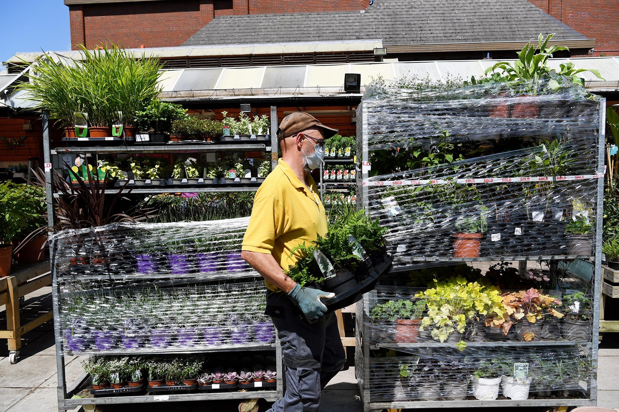 Työntekijä kantaa kasveja puutarha-alan kaupassa.