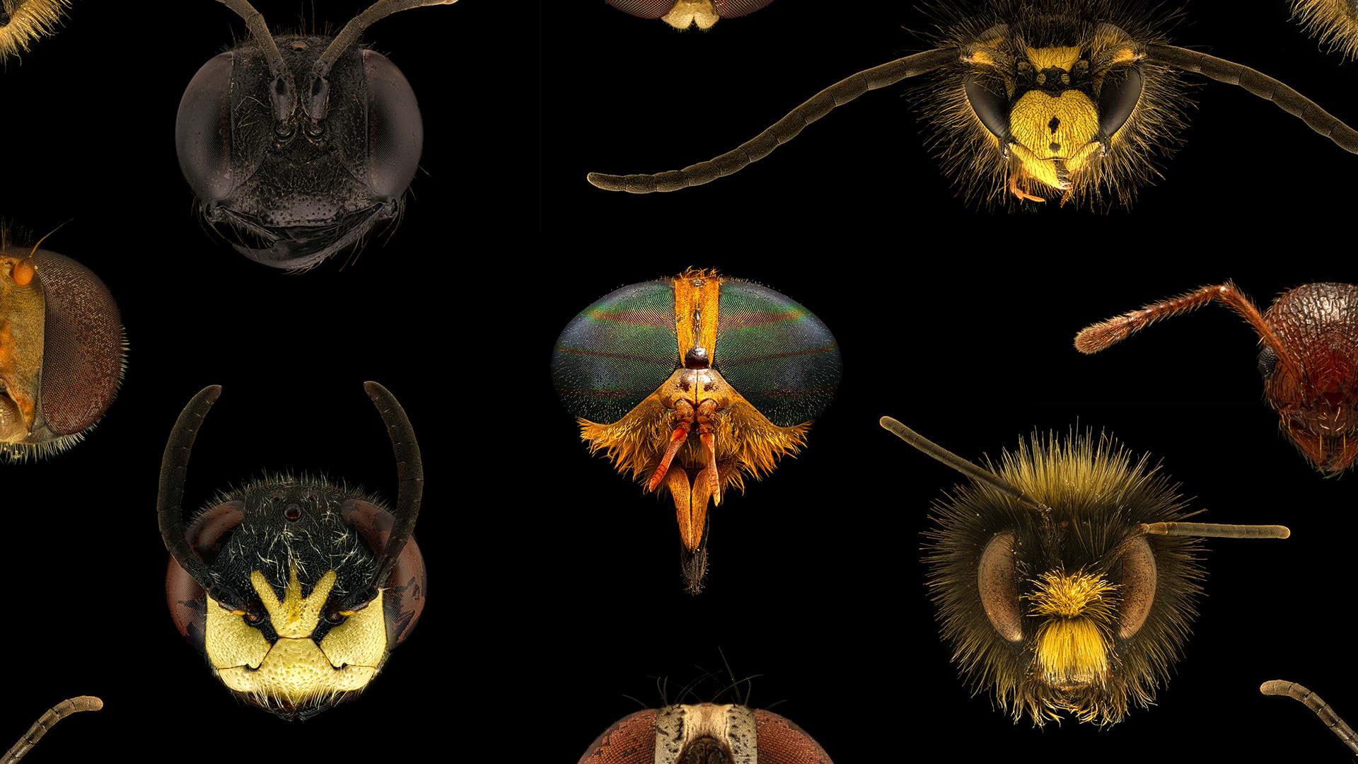 Erilaisten hyönteisten päitä mikroskoopin kautta kuvattuna.