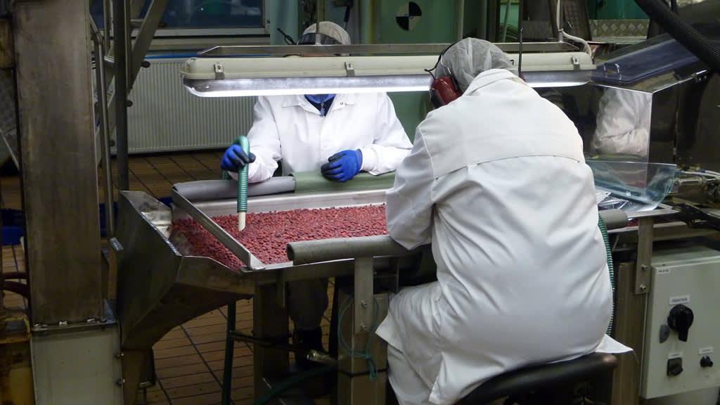 Kaksi valkotakkista työntekijää puhdistaa pakastemarjoja.