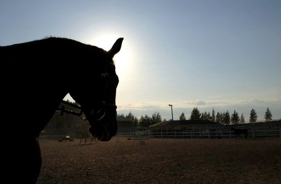 Hevonen ratsastuskentällä.
