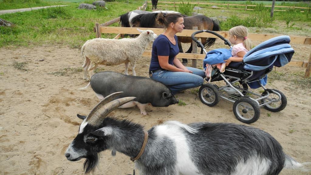 Eläimiä ja ihmisiä kotieläinpihalla.
