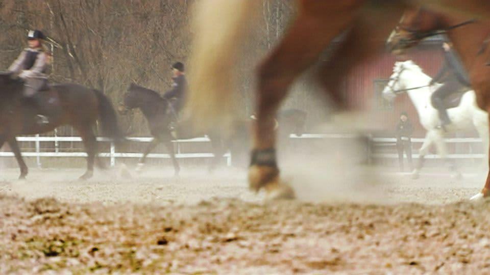 Hevosia kentällä.