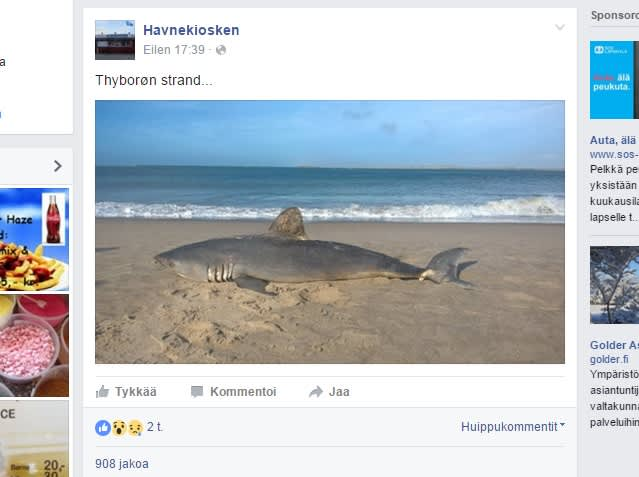 Silihai huuhtoutui Thyborønin rannalle Tanskassa.