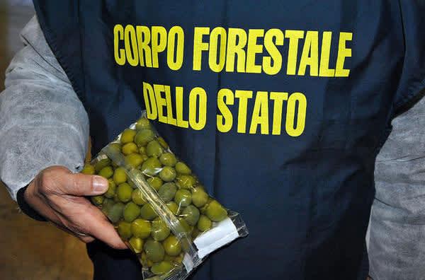 Italian poliisin takavarikoimia värjättyjä oliiveja.
