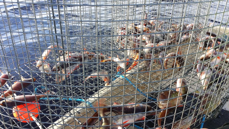 Kemijärvi kalastus