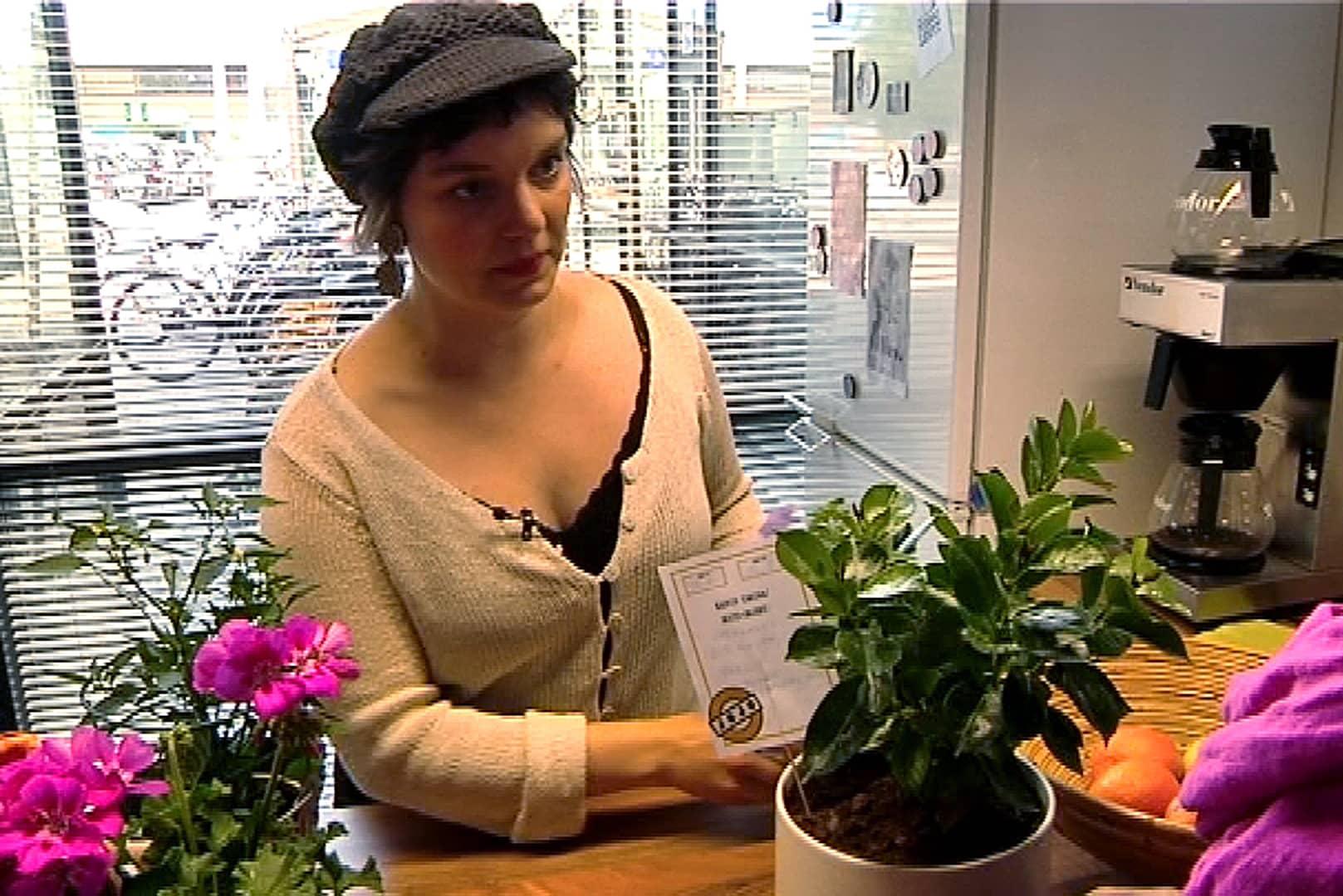 Laura Annala vastaa Seinäjoen kasvihotellista.