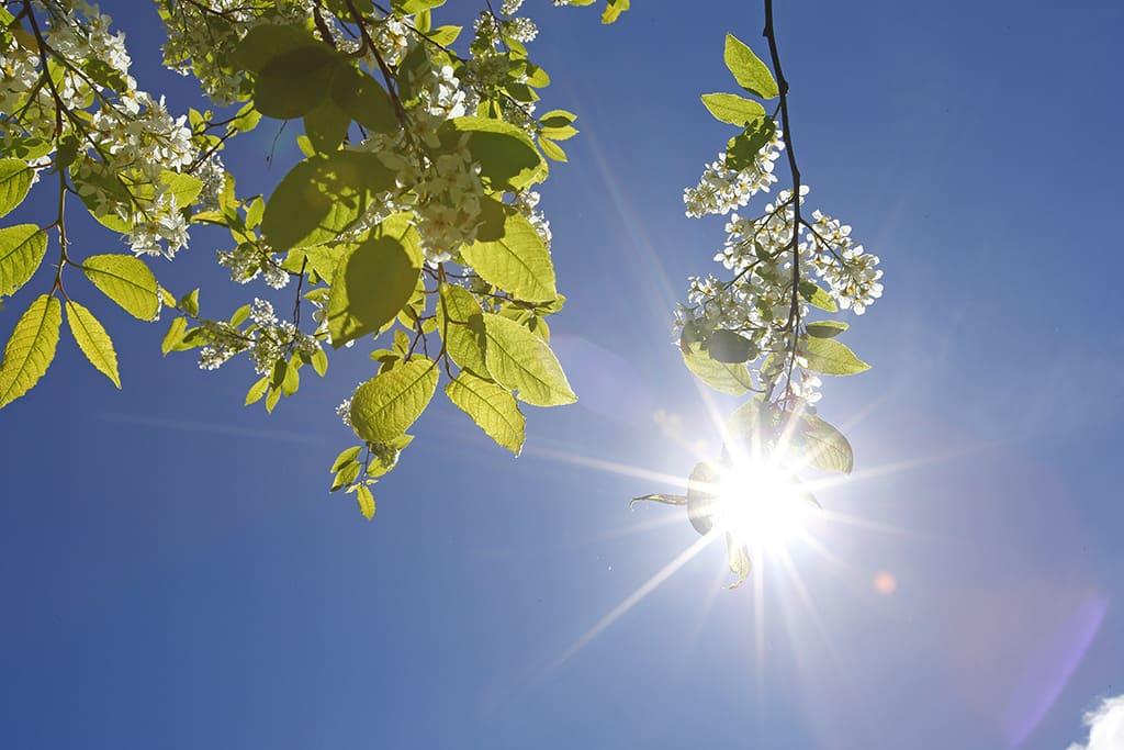 Aurinko paistaa kirkkaalta taivaalta.
