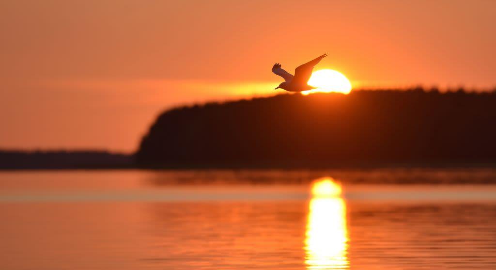 Lintu lentää taivaalla.