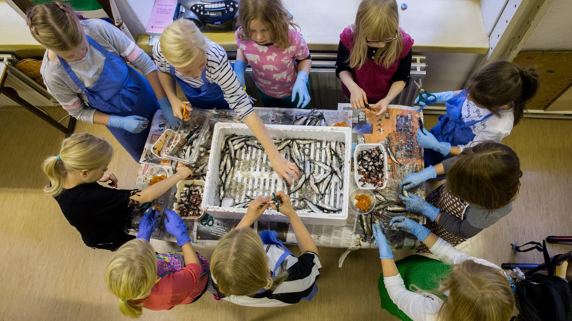Oravasaaren koululaiset purkittavat muikkuja.
