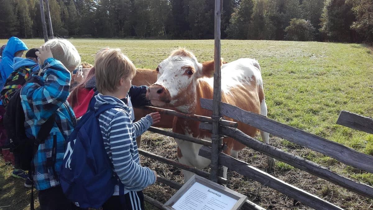 Lapset silittelevät suomenkarjanlehmiä aidan vieressä