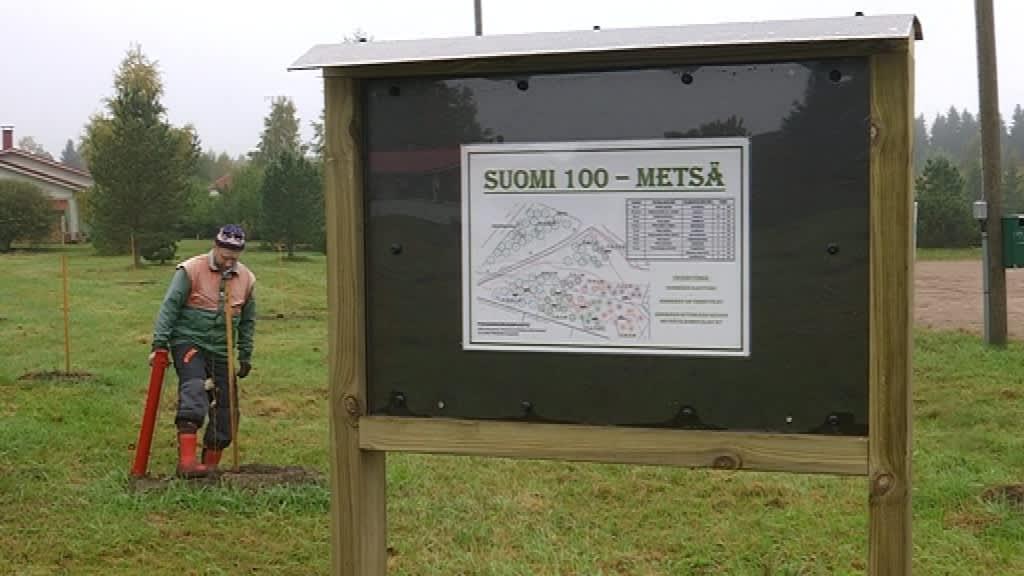 opastaulu Suomi 100 metsään