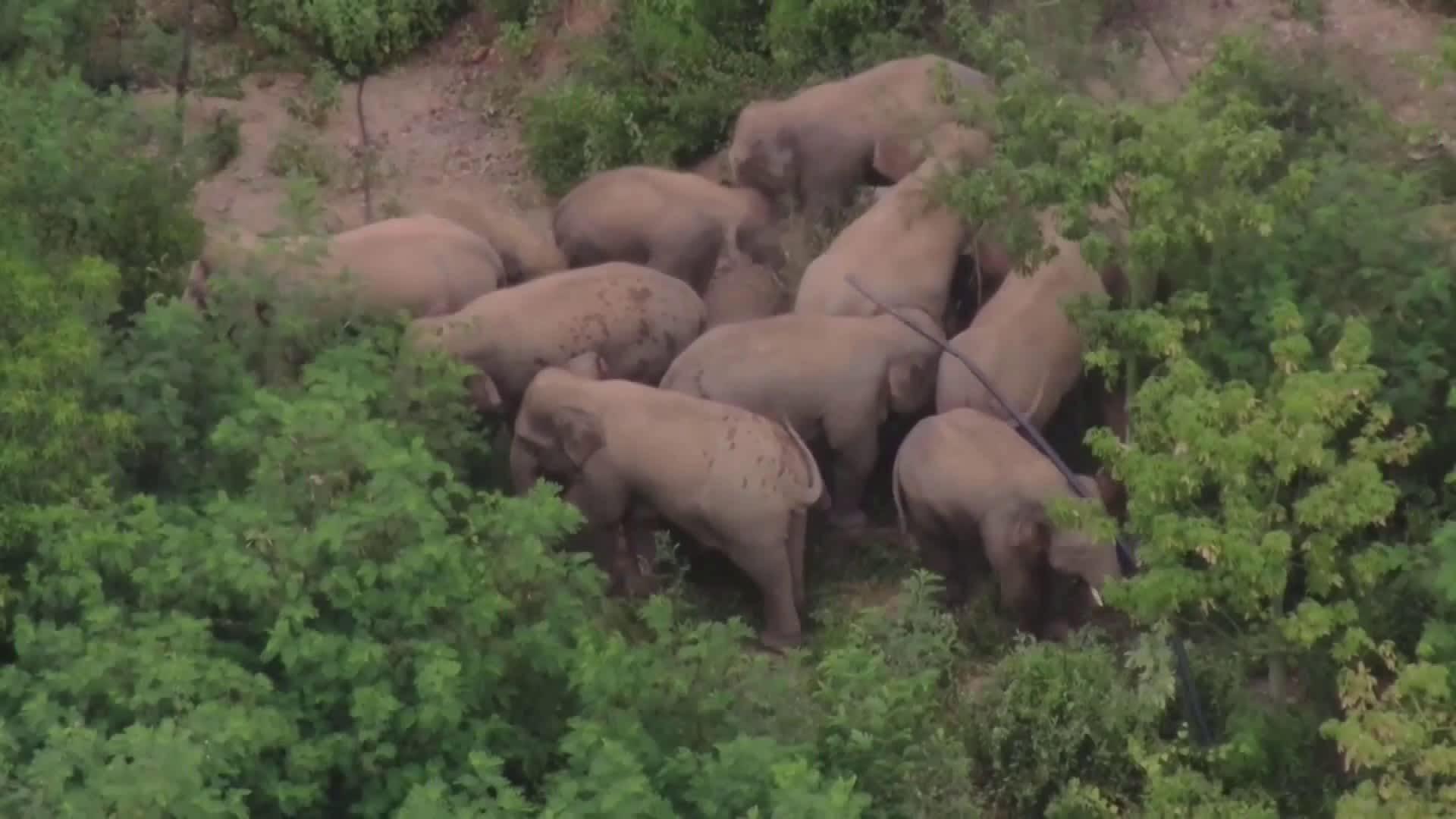 Kiinan norsulauma viimein matkalla kotiin