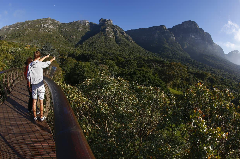 Vuoristometsää Etelä-Afrikan Kapkaupungissa. Toukokuu 2016.