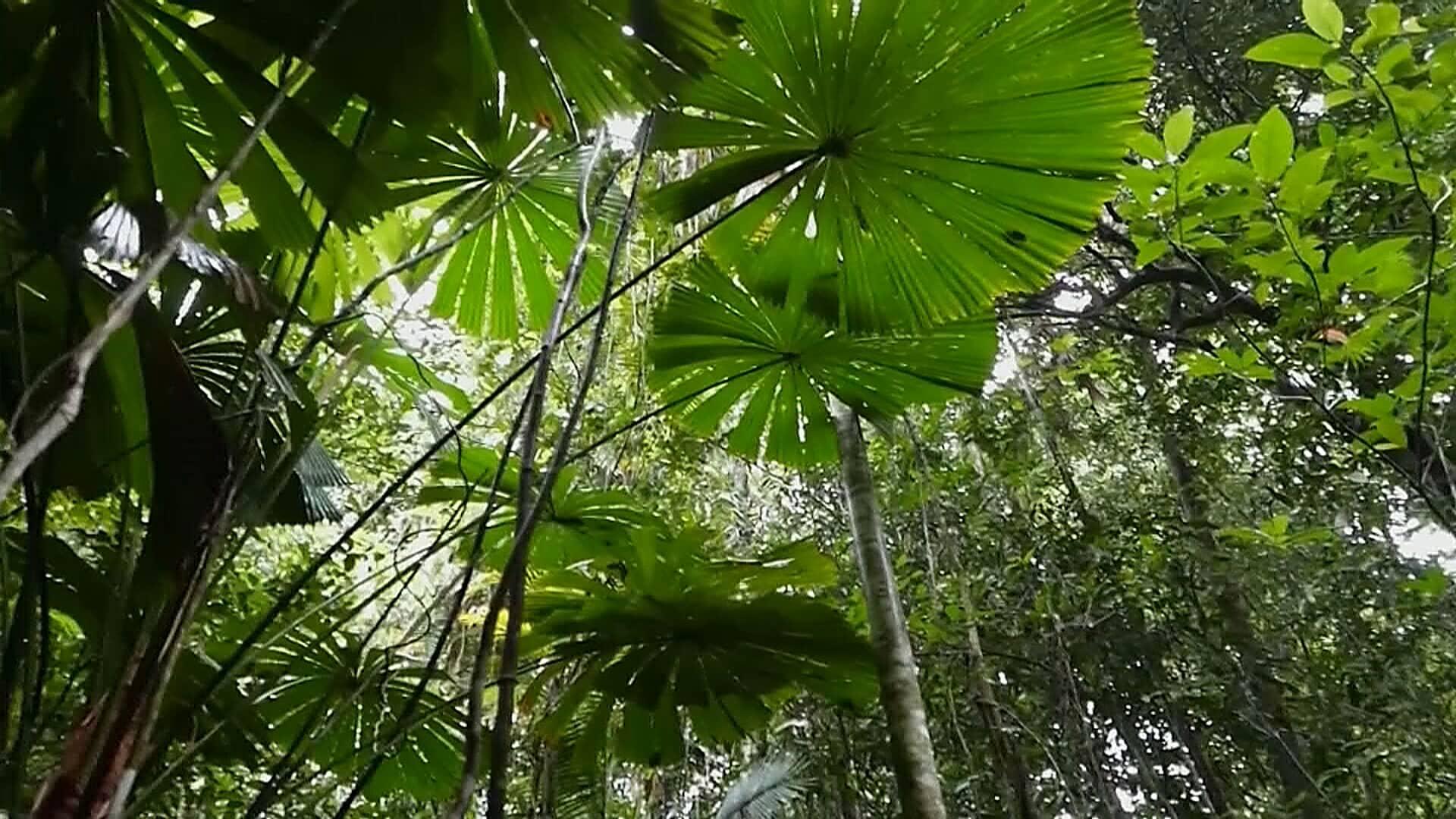 Daintreen sademetsäalue on palautettu alkuperäiskansojen omistukseen