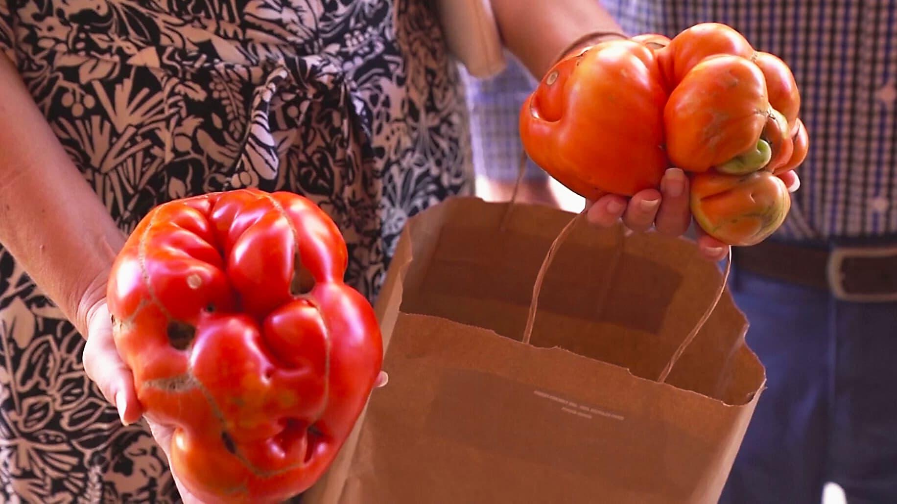 Tudelan kaupunki kisasi rumimmasta tomaatista