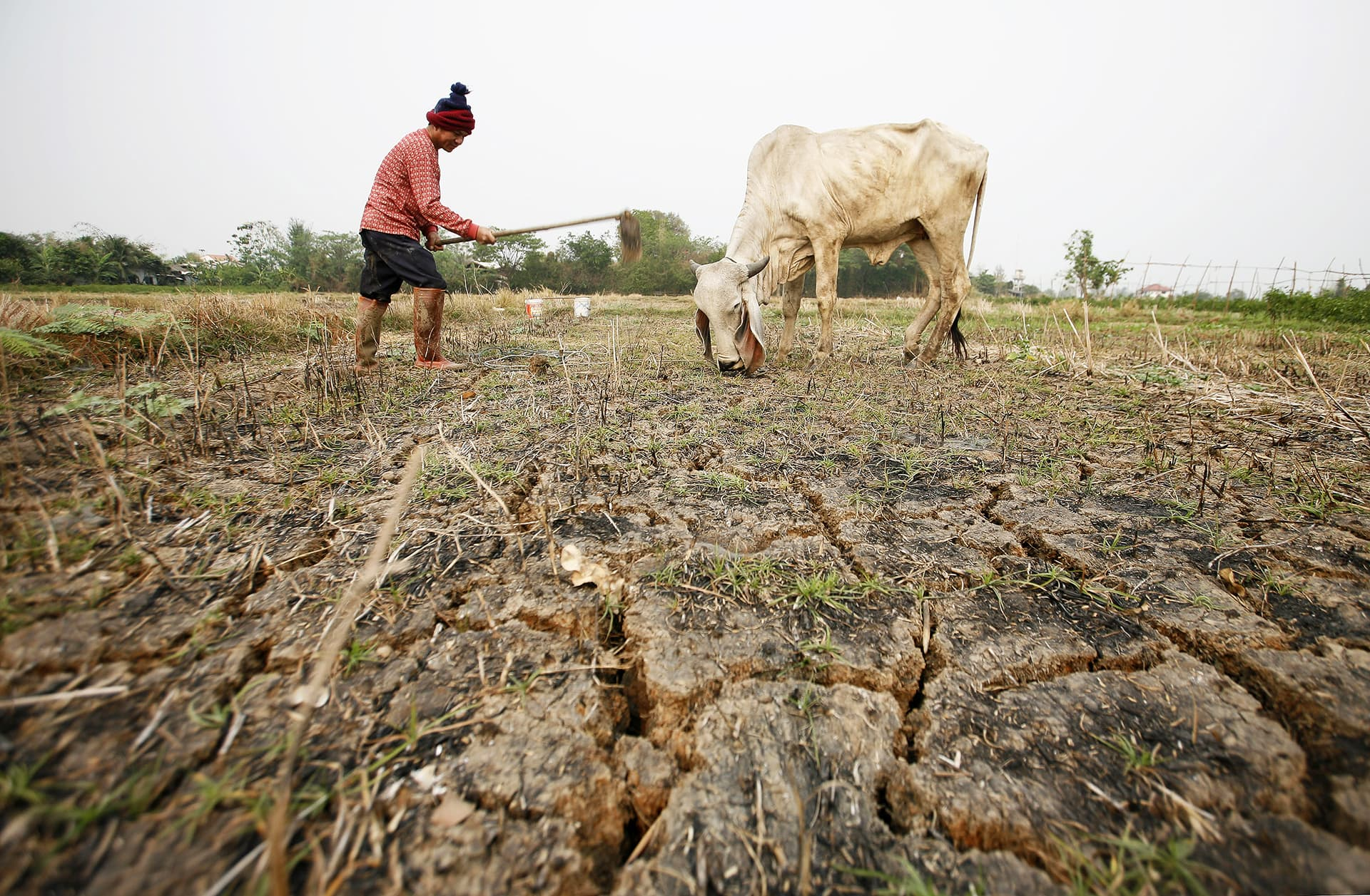 Viljelijä kuokkii kuivuuden kovettamaa riisipeltoa Chiang Maissa Thaimaassa.