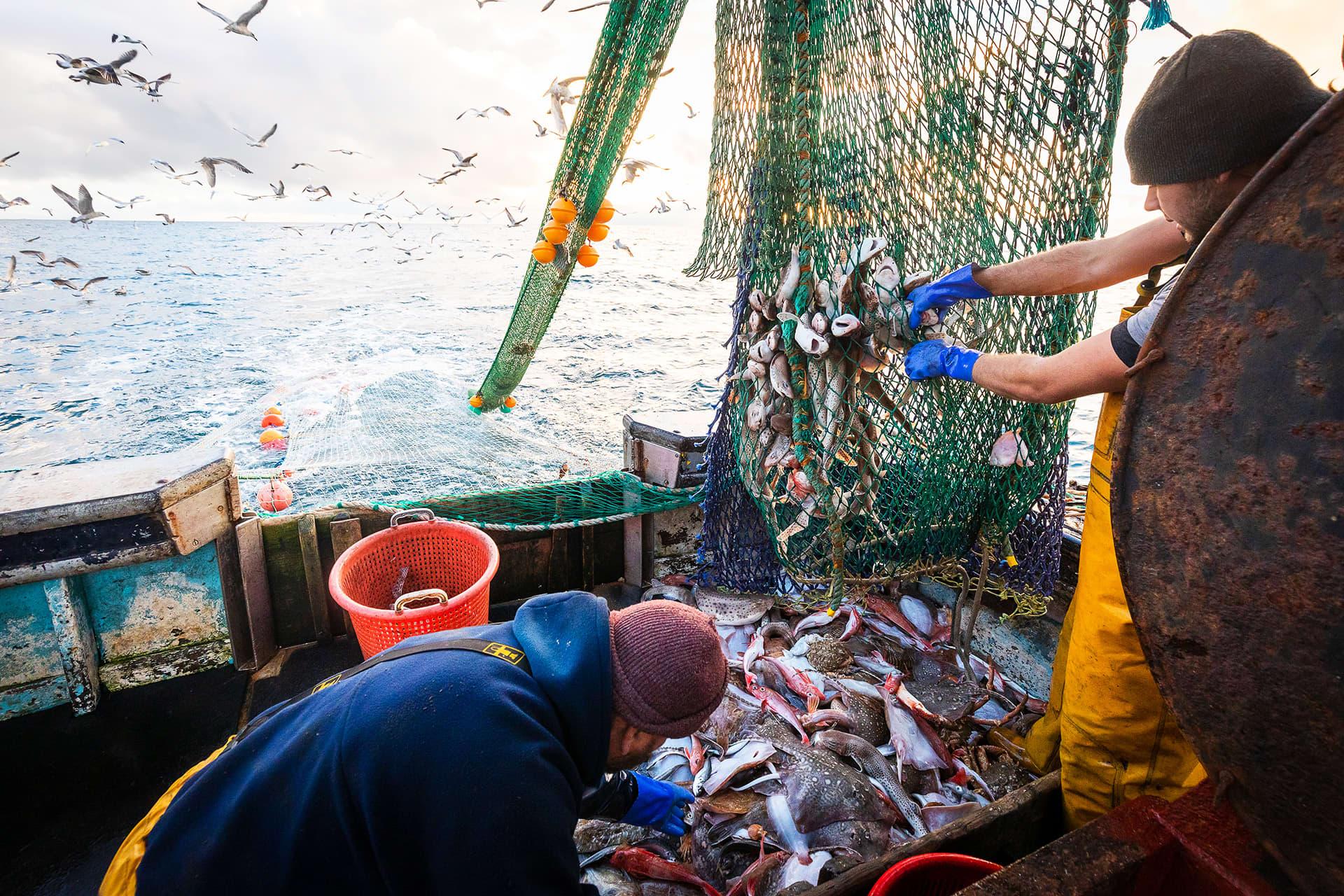 Brittitroolarin miehistö irrottaa kaloja verkosta aluksen kannella.