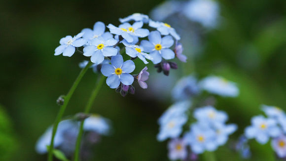 vilda blommor namn
