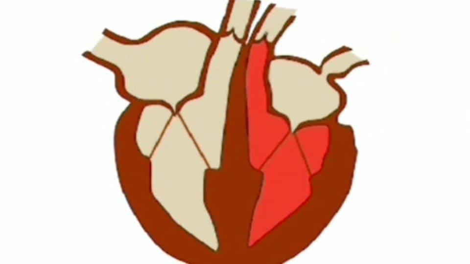 Sydämen osat ja toiminta  c21f577699