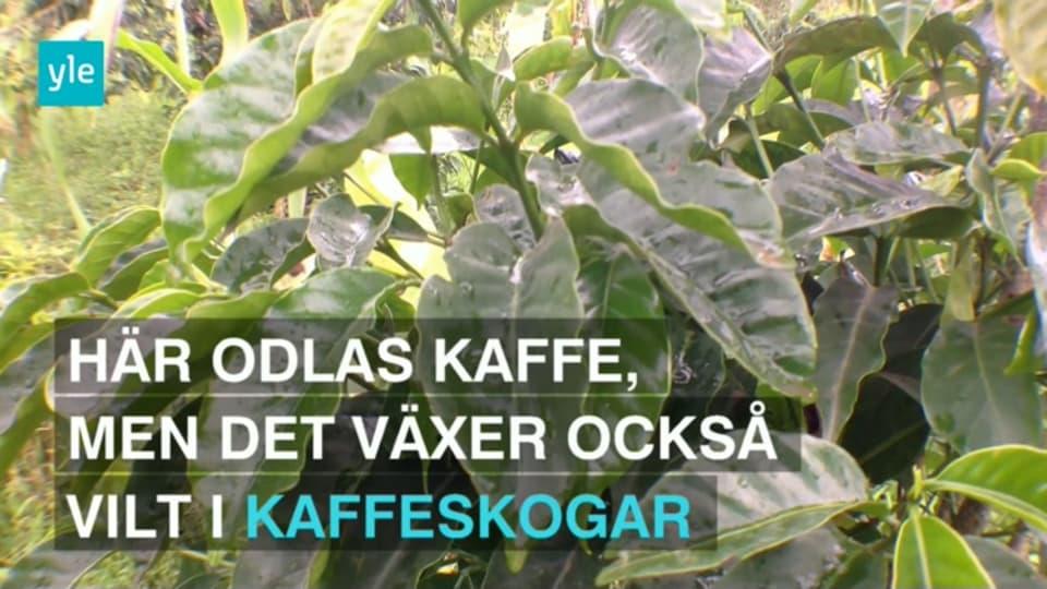 Manga svenskar daligt forsakrade