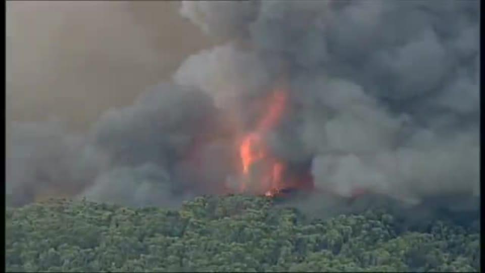 Skogsbrander rasar i australien