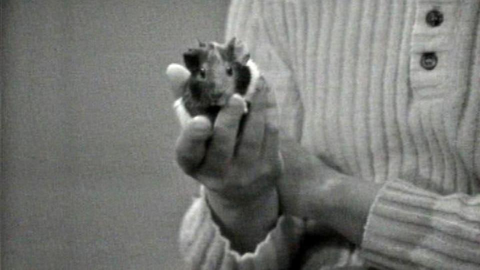 Hamsterit Tv Sarja