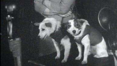 Avaruuskoirat Strelka ja Belka lehdistötilaisuudessa (1960).