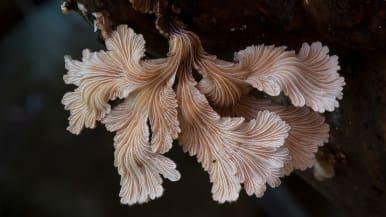 Australialainen dokumentti selvittää, miten sienet muovaavat maailmaa.