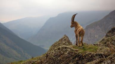 Kuusiosainen dokumenttisarja tutustuu Ranskan eri alueiden luontoon ja maantieteeseen.