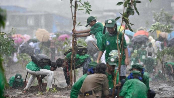 Image result for plantering av träd i kina