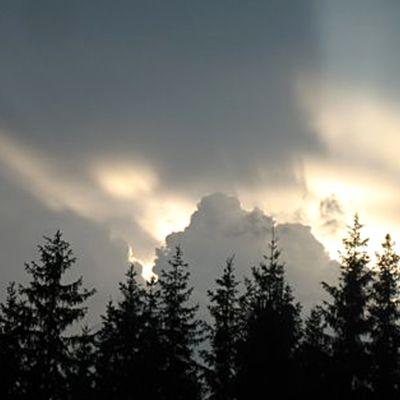 Kuvassa pilvinen taivas ja puita