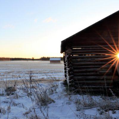 Aurinko pilkistää ladon välistä
