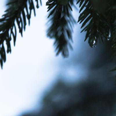 Luonto, metsä, Seitseminen, ilmastonmuutos.