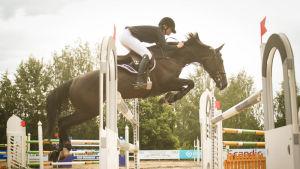 Hevonen kilparadalla