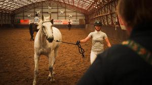 Nainen taluttaa valkoista hevosta maneesissa