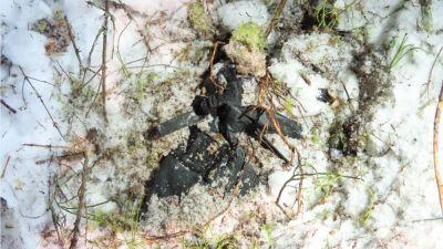 En svart väska skymtar under snön i skogsterräng.