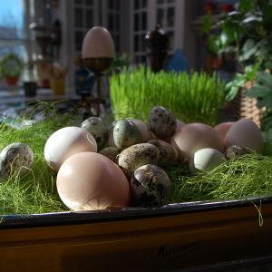 Äggen får härliga naturliga nyanser av naturliga råvorar